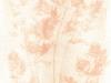 anthotype002-carotte